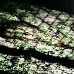 1997 平成9年5月14日【GLAY】シングル「口唇」発売
